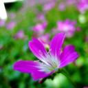 10_tiny-purple.jpg