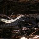 19b-snake.jpg