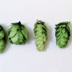 New hops cones comparison
