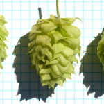 Hop Breeding, 2016 Results